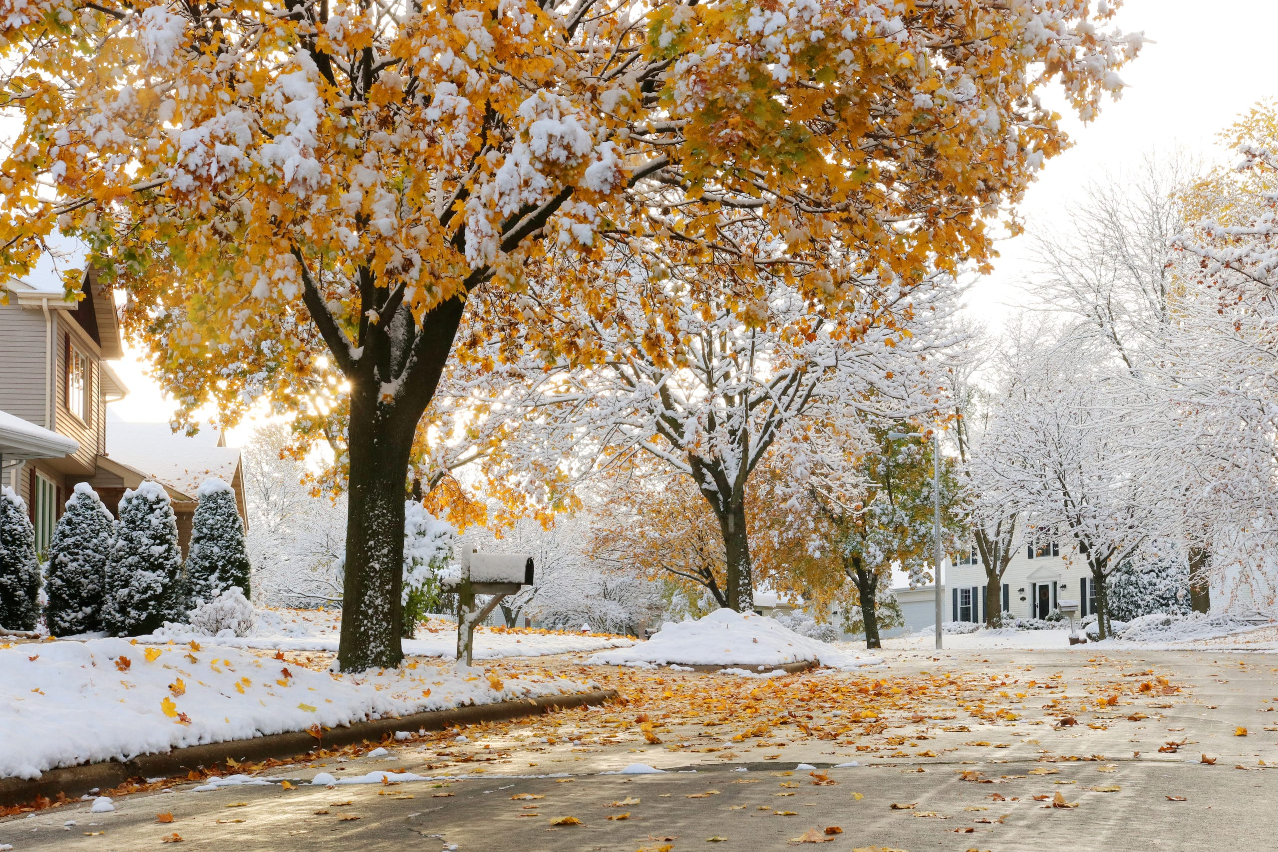 How To Prepare Your Lawn For Winter featured image