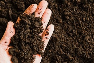 holding dirt