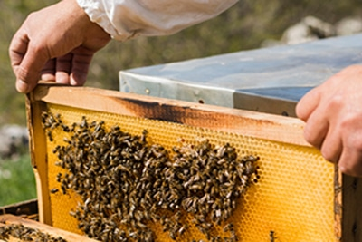SLC bee handler