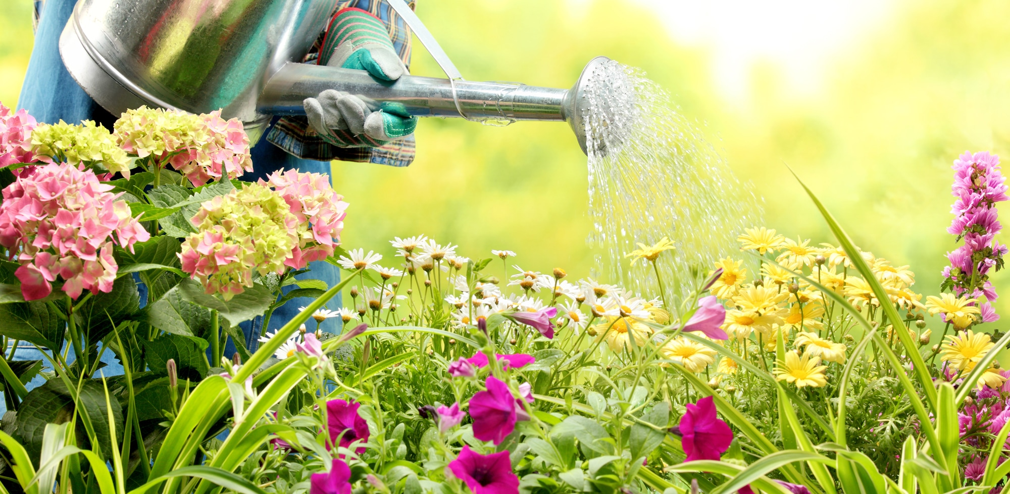 Can Watering Flowers